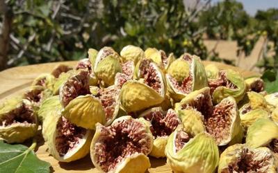 برگزاری میز ملی توسعه ی تولید ، فرآوری و صادرات محصول ارگانیگ انجیر در فارس